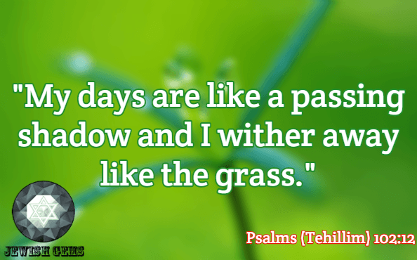Life Quotes 109